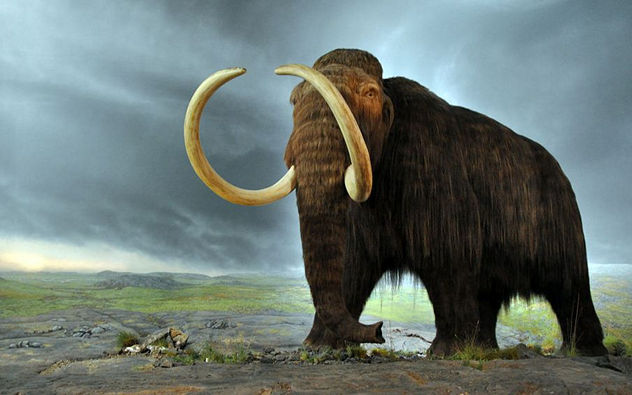 8_1024px-Woolly_mammoth