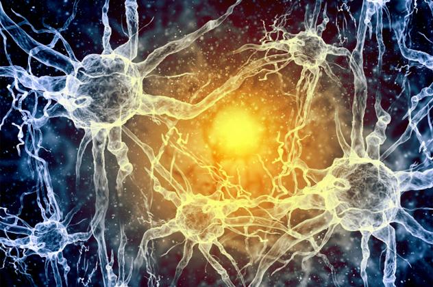 10- nerves
