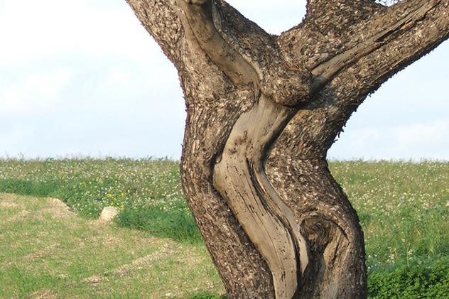 2- jesus tree