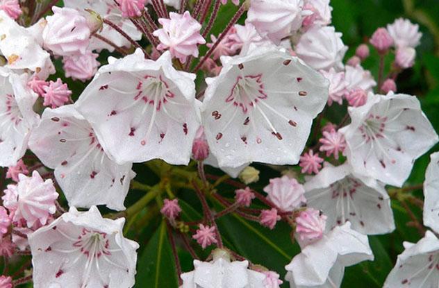 10 beautiful flowers that kill in horrifying ways listverse 01 mightylinksfo