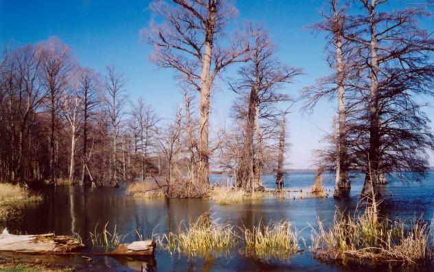 Reelfoot_Lake