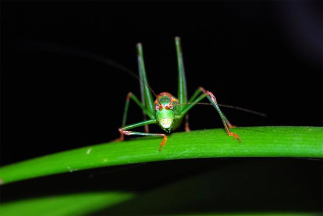 4- grasshopper