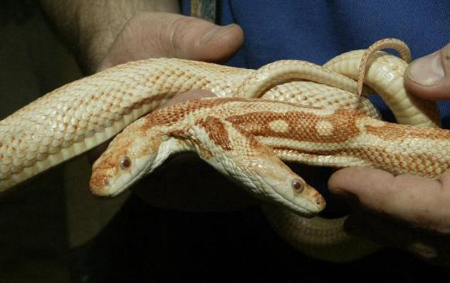 4- snake