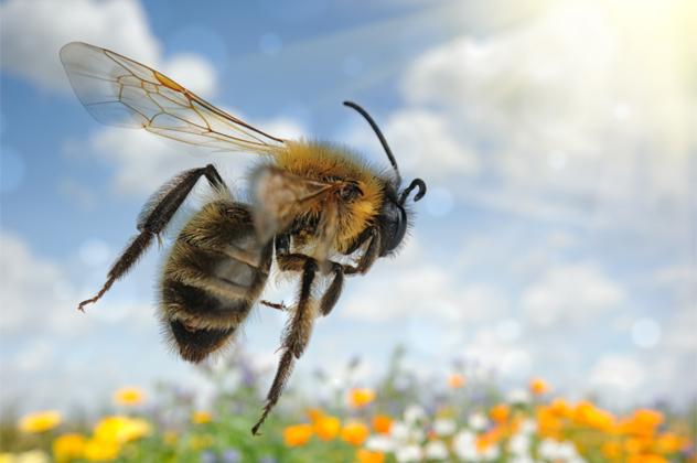 5- bee