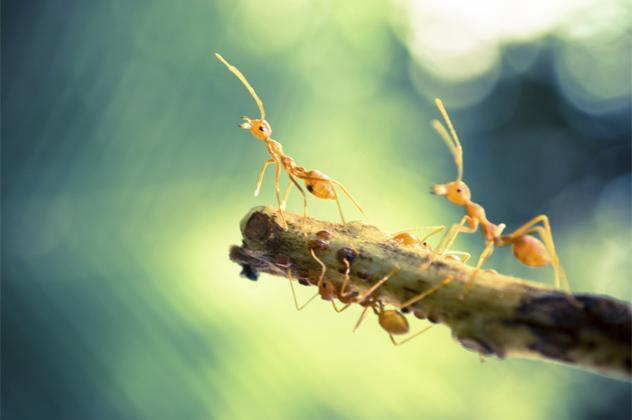 7- ants