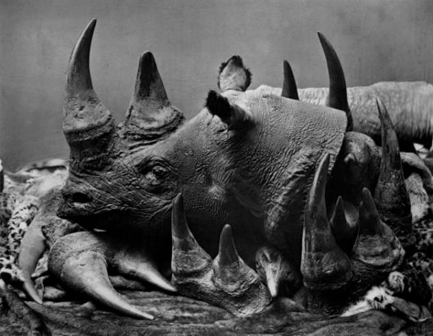 10 Rhino poaching