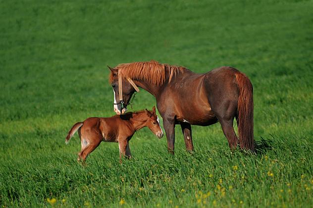 10-horses