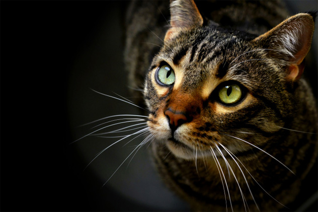 1- cat eyes