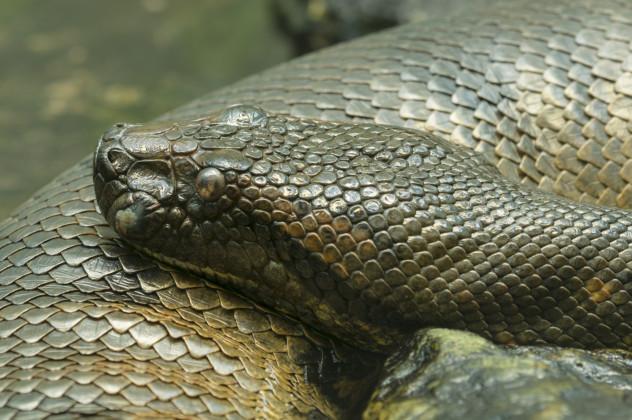 1 snake