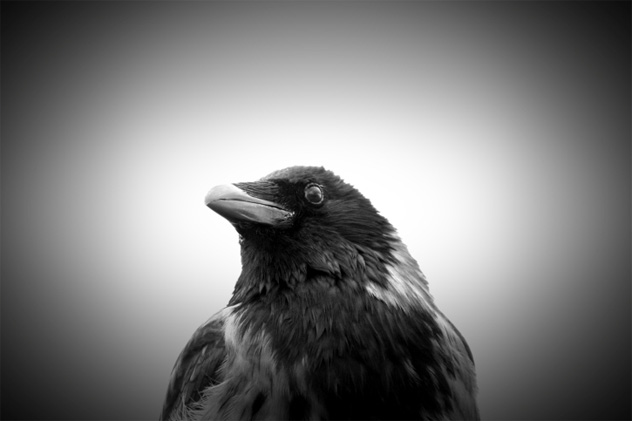 10 Crows And Ravens From World Religion Listverse