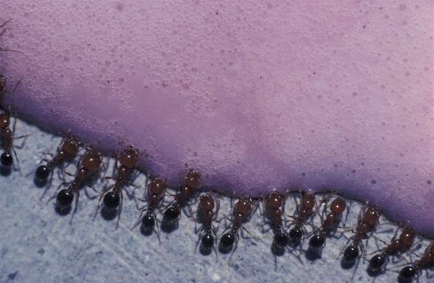 2- ants