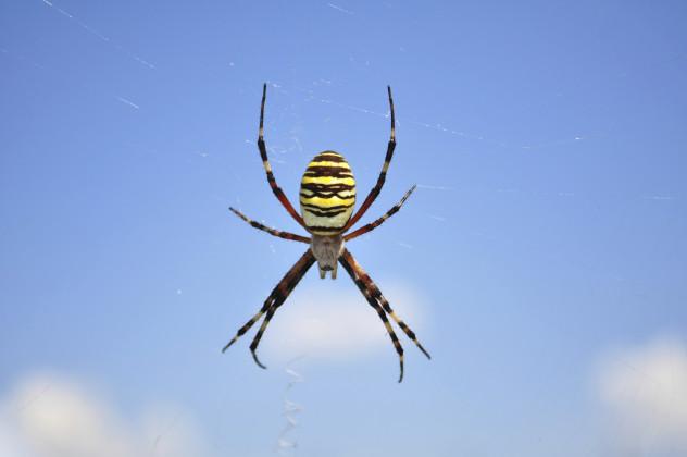 4 spider