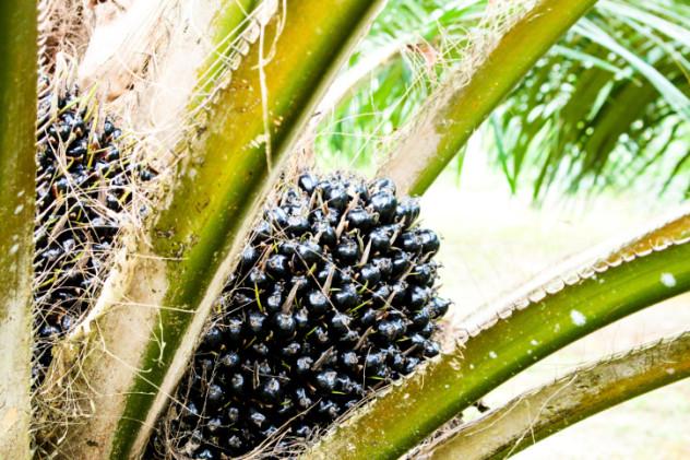 5 Palm Oil