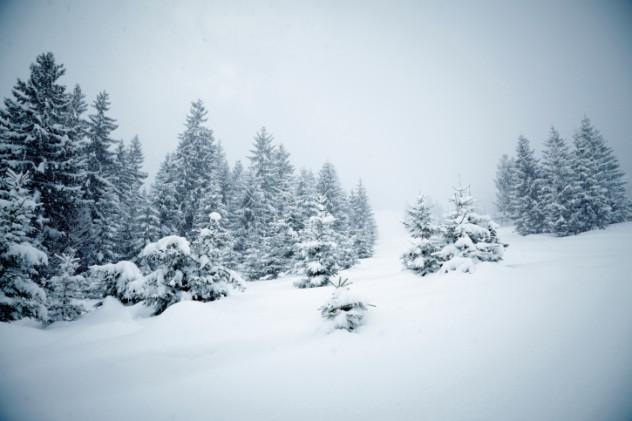 8 Blizzard