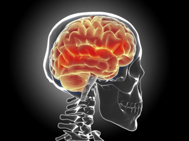 8 Brain wrinkles