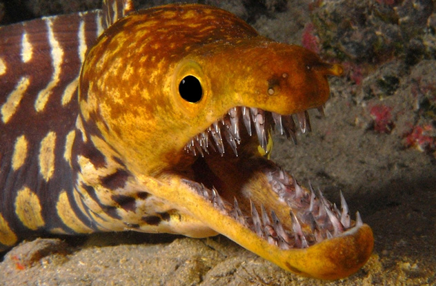 10 Undersea Creatures With Terrifying Teeth