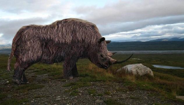 1 wooly rhino