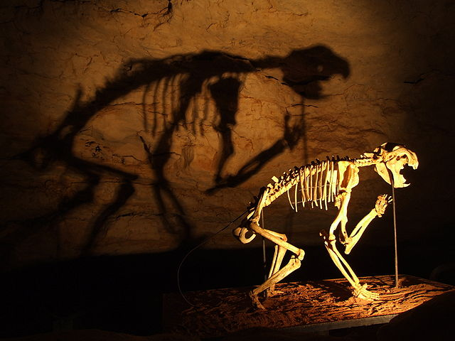 640px-Thylacoleo_skeleton_in_Naracoorte_Caves