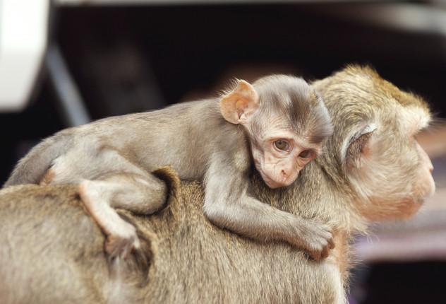 3 oxytocin