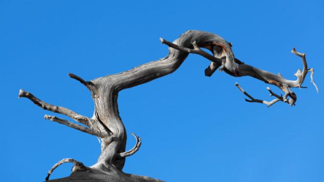 5 tree limb