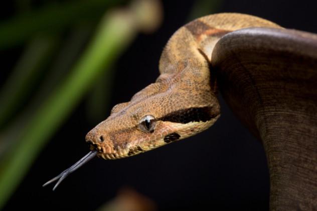 8 snake