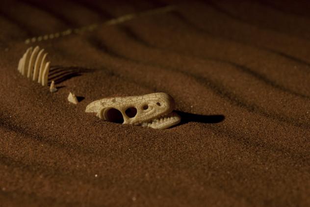 9 skeleton