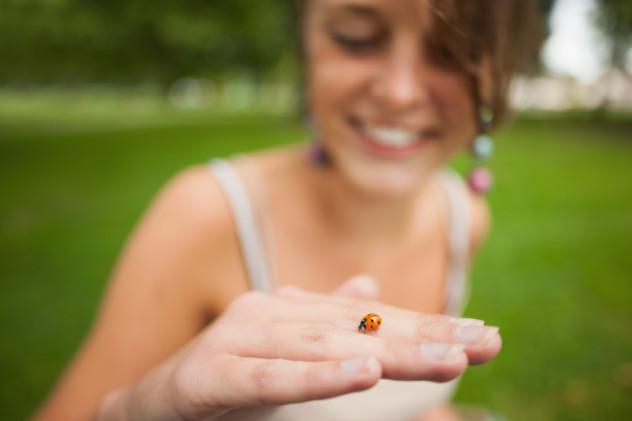 cannibal ladybug