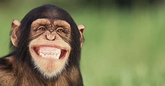 10 Ways Monkeys Are More Like Us Than We Think