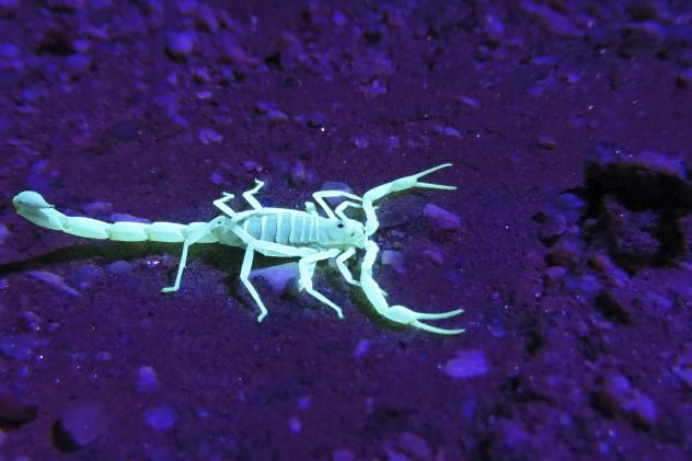 mysterious scorpion