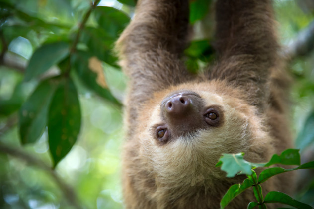 mysterious sloth