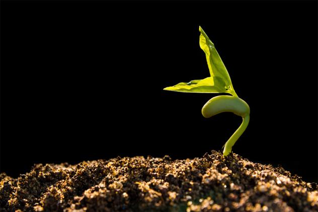 3- plant