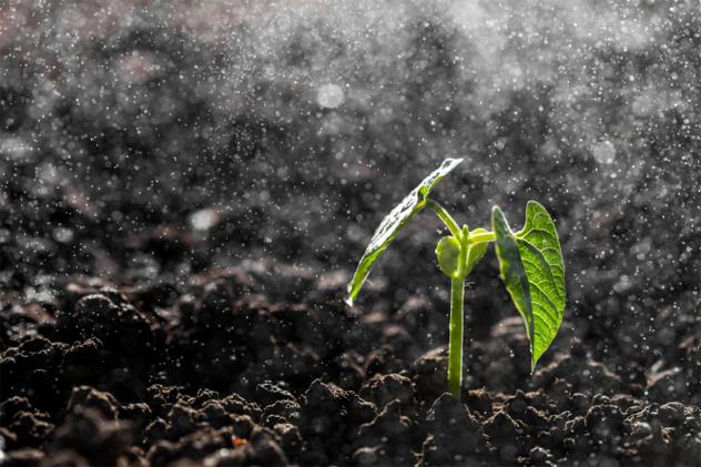 6- soil moisture