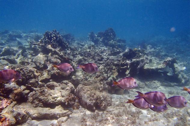 8- seamount