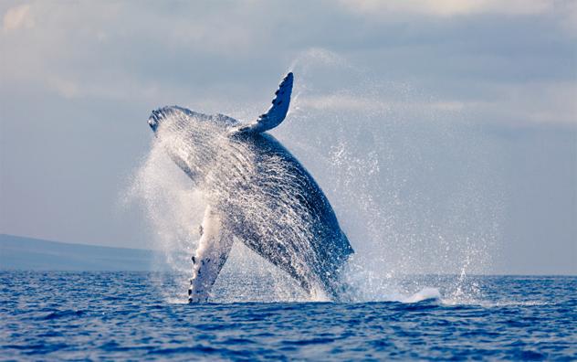2- whale