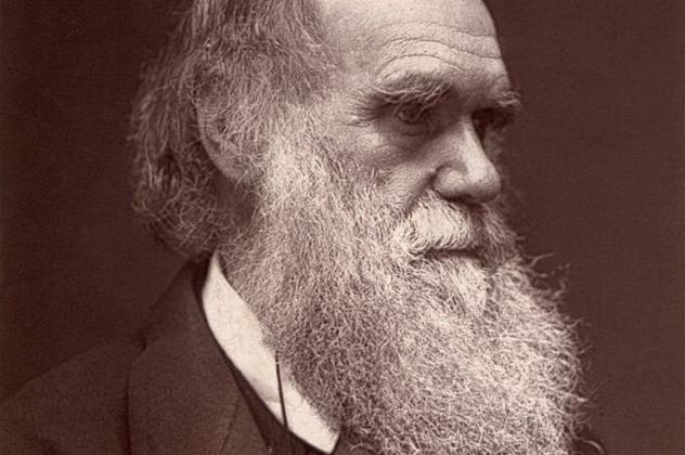 4- darwin