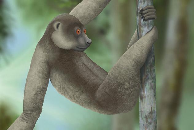 Giant Lemur