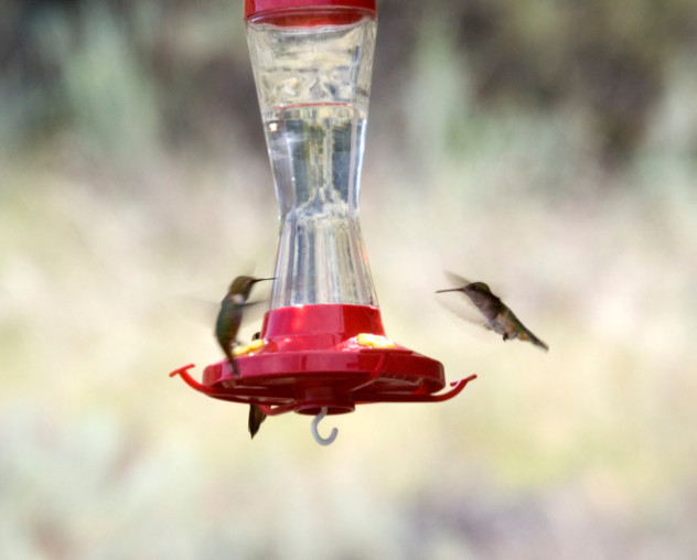 two hummingbirds at the feeder