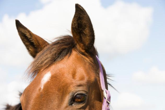 horseearsandeyes