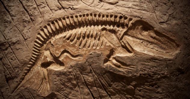 4-dinosaur-fossil-179325579