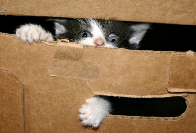 1-anak kucing-dalam-kotak-gunakan-ini