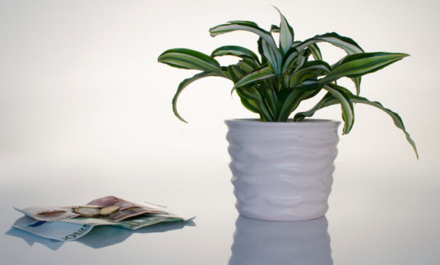 4-money-plant-pot-522512131
