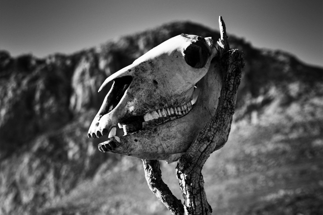 5- horse skull