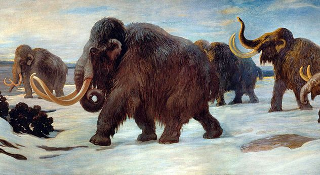 6_1024px-Wooly_Mammoths
