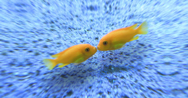 7-feature--fish-kiss-469672450