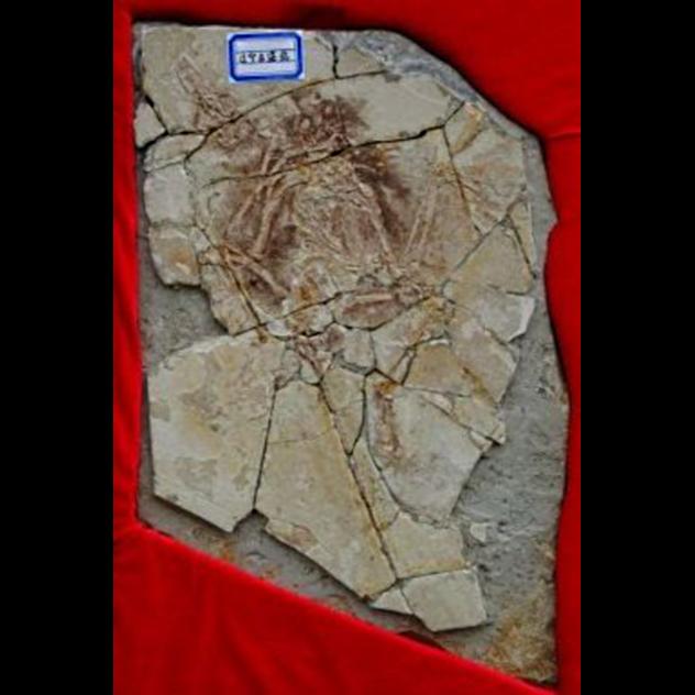 Archaeoraptor