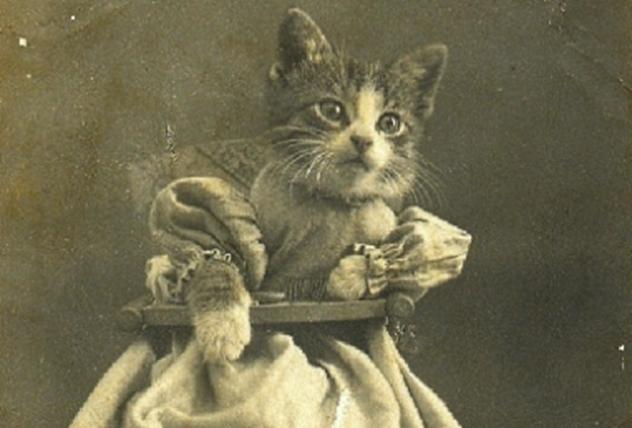 Victorian Lolcat
