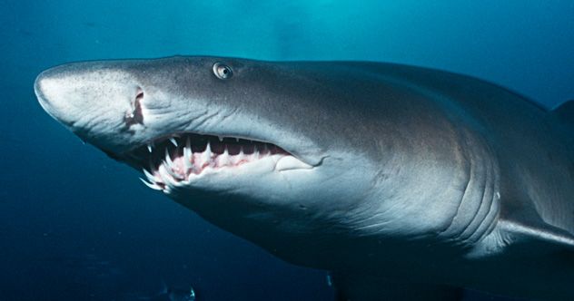 Photo of 10 Crazy Ways Sharks Will Amaze You (If You Don't Get Too Close)