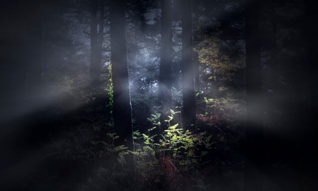 4-lights-in-woods-464771531