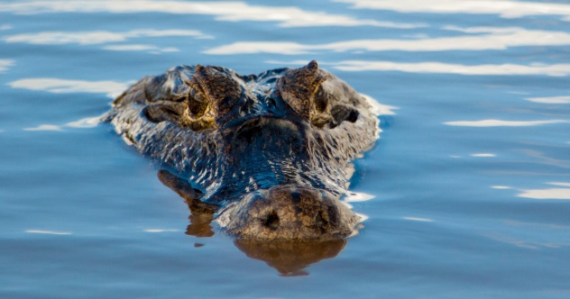 Photo of 10 Crazy Facts About Crocodilians
