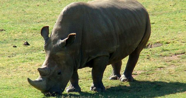 10 Groundbreaking Ideas To Combat African Poaching